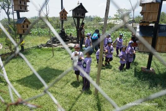 kampung kidz peternakan unggas